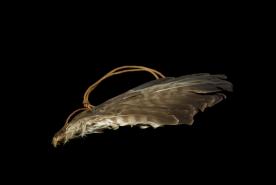 Flügel forntal